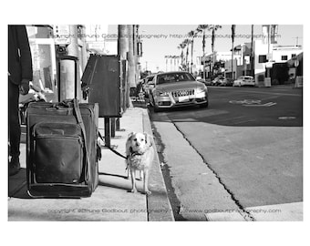 Dog & Suitcase Abbott Kinney - Los Angeles, CA  2016