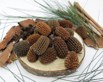NATURAL SHEOAK NUTS, wood nuts, crafting nuts, natural wood, rustic wood decoration, wedding & party, rustic wedding supplies, tree nuts
