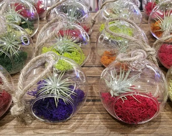 BASIX - Air Plant Globe Terrariums - Hand Blown Glass - 3 Sizes - Assorted Colors and Plants