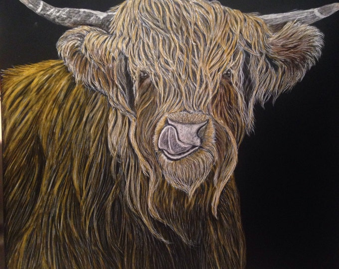 Out to Pasture -- Scottish Highlands cow 12x12 inch scratchboard: AVAILABLE NOW!