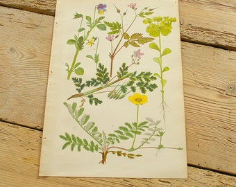 Vintage antique botanical illustration K. Original book plate.Wild plants.Color illustrations flowers prints.Wall decor.Yellow purple green