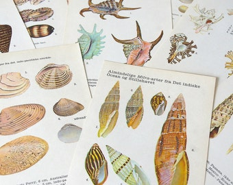 Vintage shell illustrations original.Book pages shells.Color illustrations.Prints.Collage pages.Colorful shells.Wall decor.Paper supply