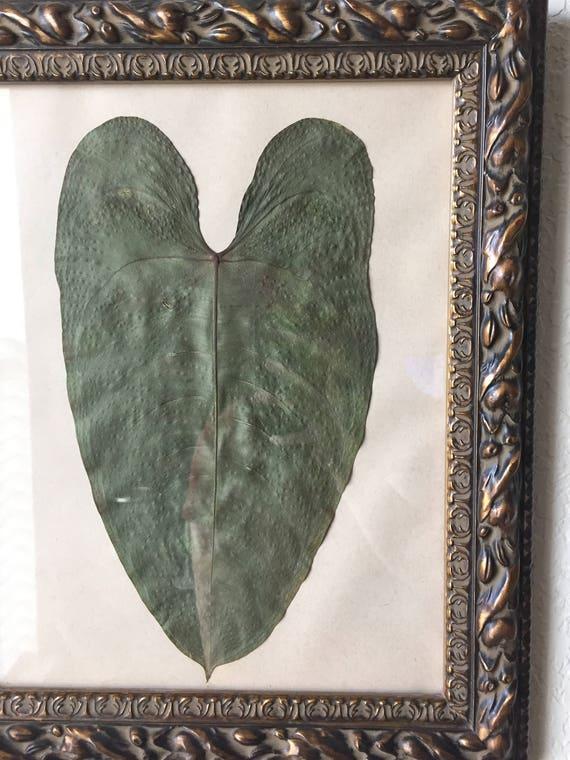 Anthurium Art- Tropical Foliage- Framed Tropical Plant Art 11x14 - Real Pressed Botanical - Herbarium Art - Large Botanical Decor- Parchment