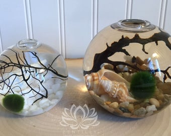 Marimo Sphere Aquariums by Zentilly©