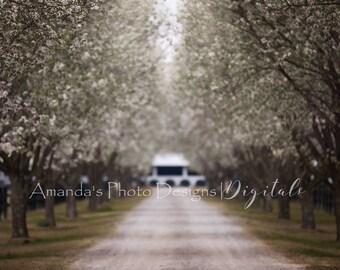 Heavenlane Spring Image