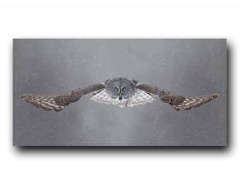 Owl Photo,Owl Print,Snowy Owl,Nature Print,Bird Picture,Bird Photography,Bird in flight,Wildlife Photogrpahy,Great Grey Owl,Nature Photo,Owl