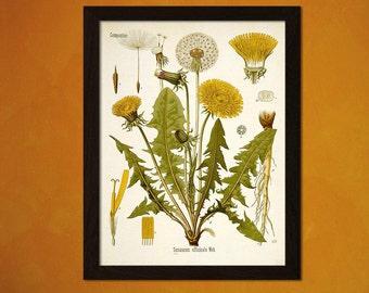 FINE ART REPRODUCTION Taraxacum Officinale Dandelion Print Vintage   Botanical Flower Print Garden    Art Floral Illustration