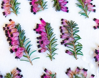 FRESH PRESSED FLOWERS Today!!Heather Kramer's Heather Purple Flowers Pink Flowers 15 Dried Flowers Craft Flowers Romantic Flower Note Cards