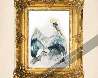 Pelican Study in Watercolor