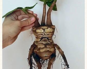 Mandrake (Мандрагора)