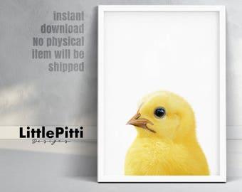 Chicken decor, nursery art, chick art print, printable baby chicken, yellow nursery decor, farm animal art, farm birds, little birds print