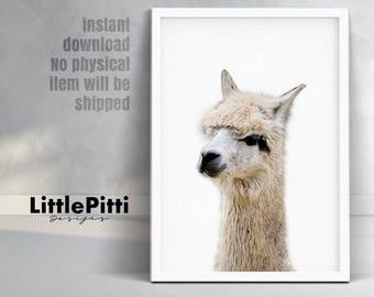 Alpaca print, minimalist nursery decor, printable alpaca, animals wall art, modern colour animal, large poster, instant download, kids room