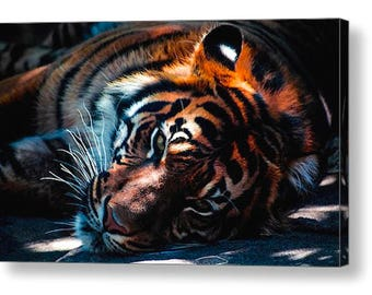 Sun Tiger 001  Photo Canvas Art  A4, A3, A2, A1