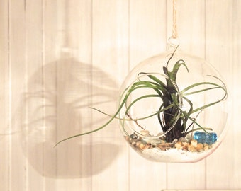 Glass Ball Terrarium & Air plant