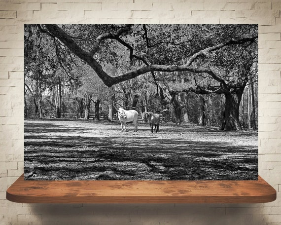 Horse Photograph - Fine Art Print - Wall Decor - Black & White - Equine Decor - Pictures of Horses - Farm House Decor - Horse Artwork