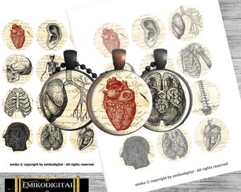 "80% Off 2 inch circle Vintage Anatomy Bottlecap Digital Collage Sheet 8.5""x11"" Jewelry pendants,scrapbooking,magnets,Medicine Digital"