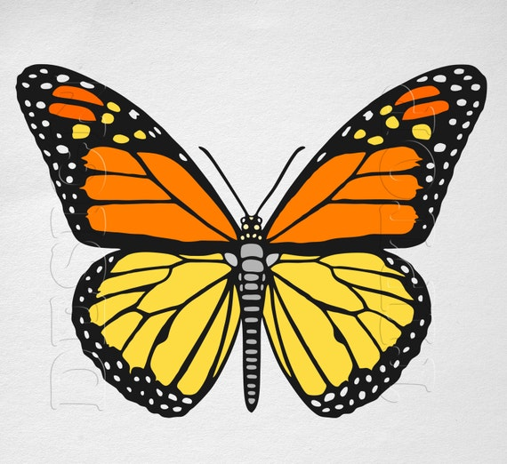 Butterfly SVG Monarch Butterfly Print And Cut Files