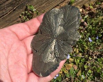 Unique pyrite sun