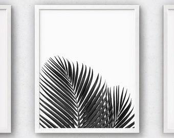 Botanical Prints, Palm Plant, Leaf Printables, Tropical Art, Download Artwork, Tree Wall Art, Leaves, Tropics, Nature Decor, Palm Tree Photo