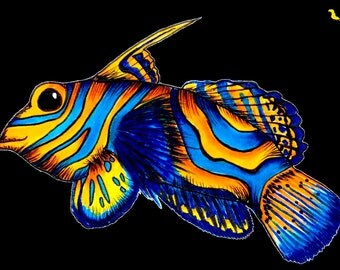 Mandarin Fish Sticker