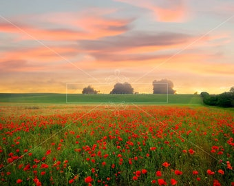 Poppy Field Digital Backdrop / Background, High Resolution, Instant Download.