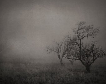 Trees in Fog Photograph,  Dark Photography, Trees, Silhouette,  Prints and Canvas available, Home Decor, Art, Large Art,