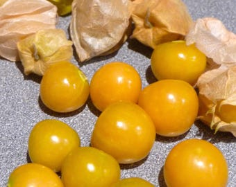 Physalis pruinosa Ground Cherry Aunt Molly's Husk Tomato Organic Non GMO Heirloom 30 Seeds #1152