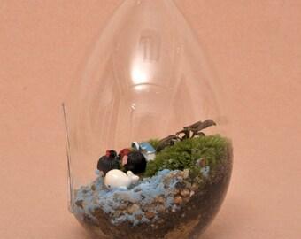Egg-shaped Moss Micro Landscape Ecological Bottle Plant Landscape Glass Vase