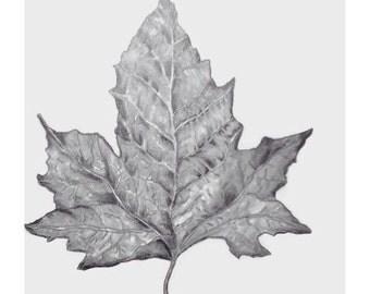 Pencil sketch, Graphite drawing, Fall Original sketch, nature drawing, Graphite sketch, Leaf art, black and white art