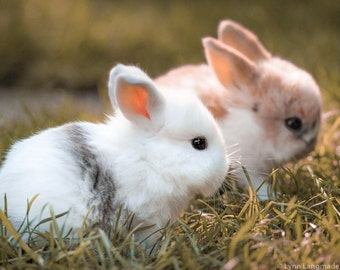 "Baby Animal Nursery Art - baby bunny print 8x10 bunnies nursery decor 11x14 farm animal print 16x20 5x7 easter decoration ""Chubby Buddies"""