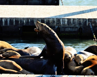 Life as a Sea Lion - Chromogenic Photographic Prints
