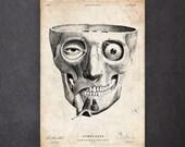 Anatomy art print Human skull wall art Medical student gift Macabre print CA014