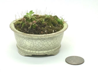 A Vintage small planter - Made in Japan - A miniature zen garden - 1970s- China