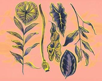 Peach plants