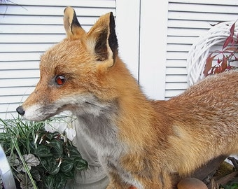 Vintage Fox Preparation Fox shabby chic hunting
