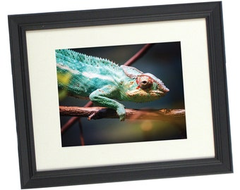 chameleon photography 8 x 10 print 11 x 14 frame matted to 8 x 10 great home decor