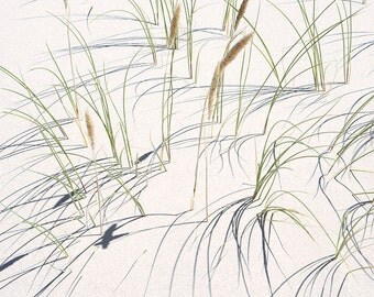 Dune Grasses 3 matted fine art archival print
