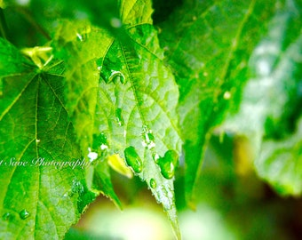 Green Rain, Photography, Home Decor