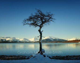 Milarrochy Tree, Scotland photography, Scotland art print, Scotland