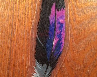 Violet Backed Starling Feather D