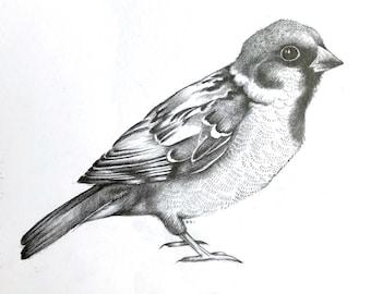 Sparrow - Original illustration