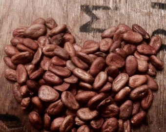 Mexican Raw Cacao Beans