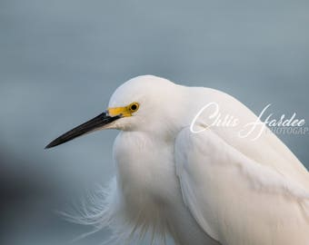 White Bird Picture, Florida Wildlife Photography, White, Blue, Gray Art, Home Decor, Digital Print