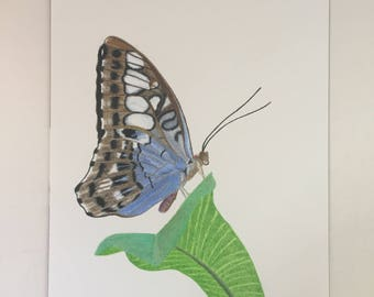 Blue Butterfly Coloured Pencil Original Drawing