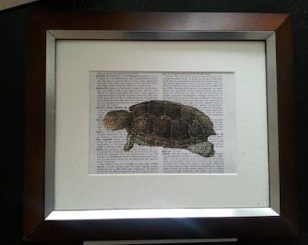Vintage Turtle on Encyclopedia Paper