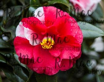 Red Spring Flower