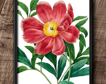 Red Peony · 8x10 · Instant Download · Flower · Vintage · Wall · Printable · Digital File #40