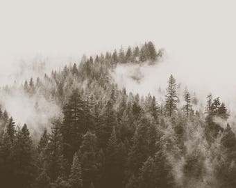 Fog In The Forest Print