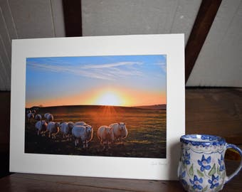 "A mounted 12""x 8"" photo of Sheep at Sunrise together with an A6 card/notelet with a small photograph by Jack By The Hedge."