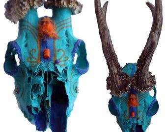 Skull - blue/Orange